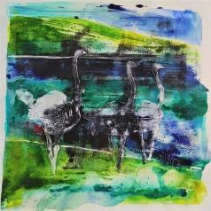 Ostriches #1
