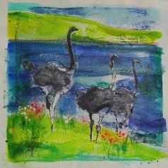 Ostriches #2