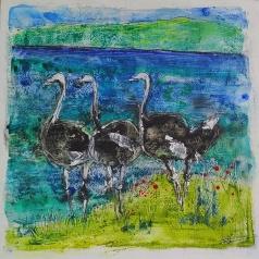 Ostriches #3